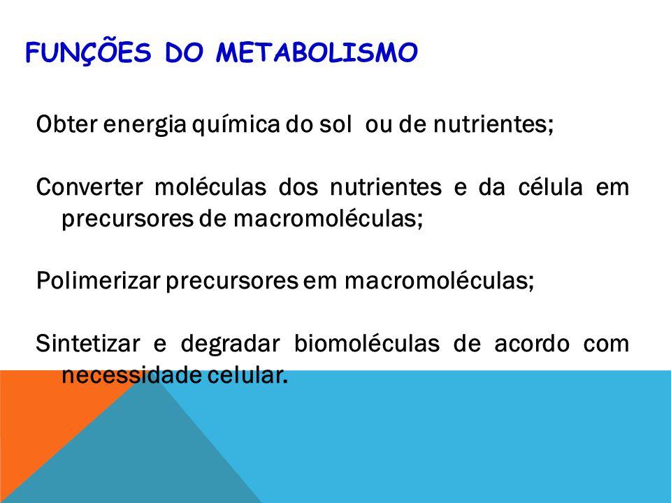 Funções do Metabolismo