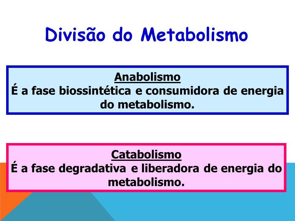 Divisão do Metabolismo