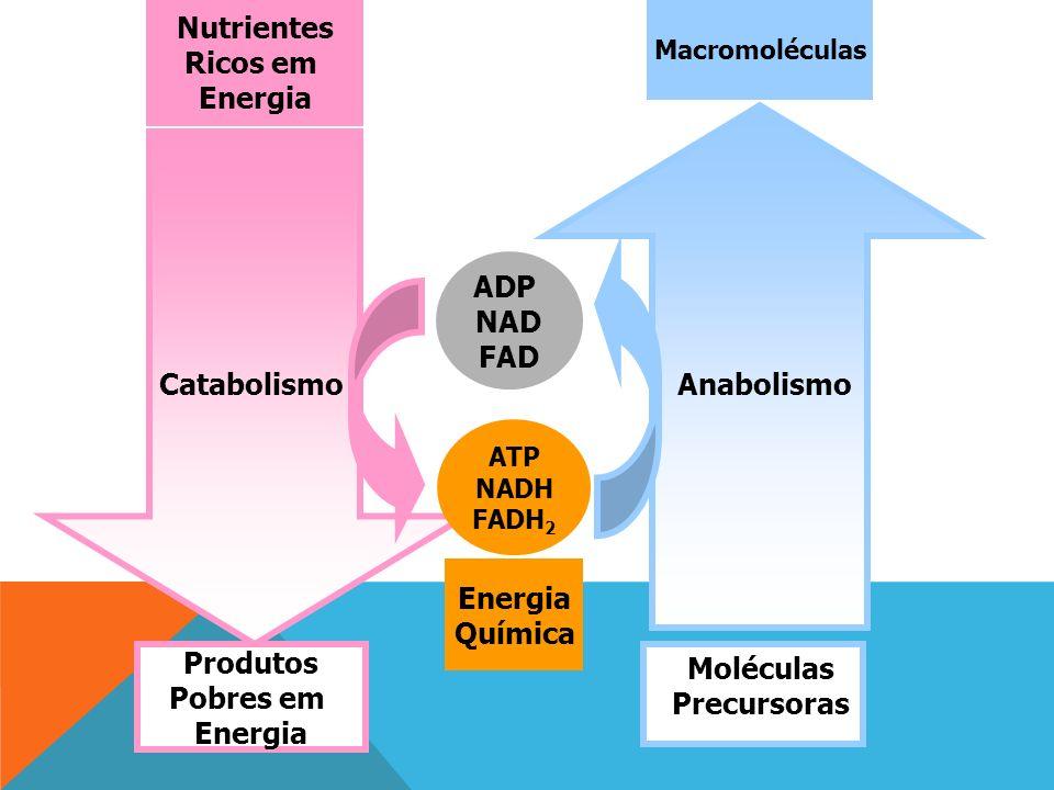 Nutrientes Ricos em Energia ADP NAD FAD Catabolismo Anabolismo Energia