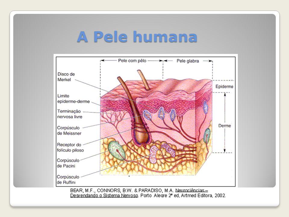 A Pele humana