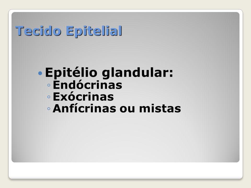 Tecido Epitelial Epitélio glandular: Endócrinas Exócrinas
