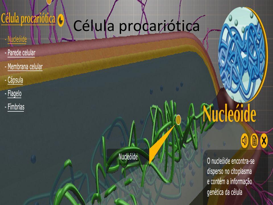 Célula procariótica