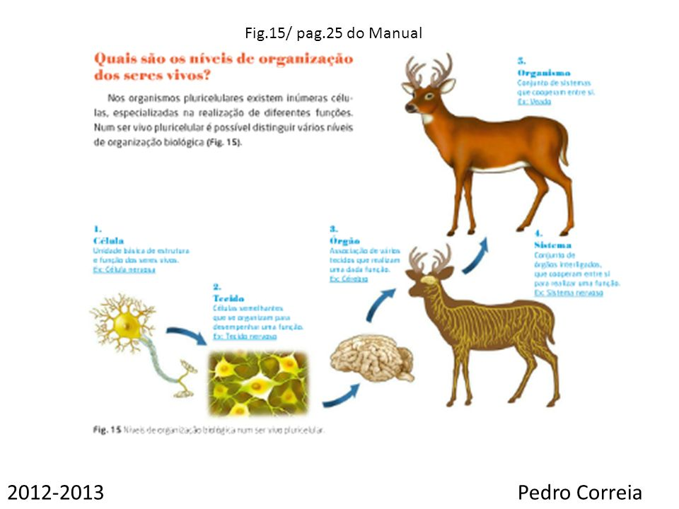 Fig.15/ pag.25 do Manual 2012-2013 Pedro Correia