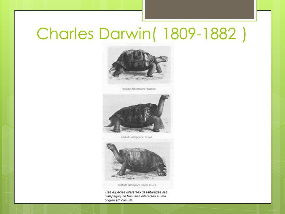 Charles Darwin( 1809-1882 )