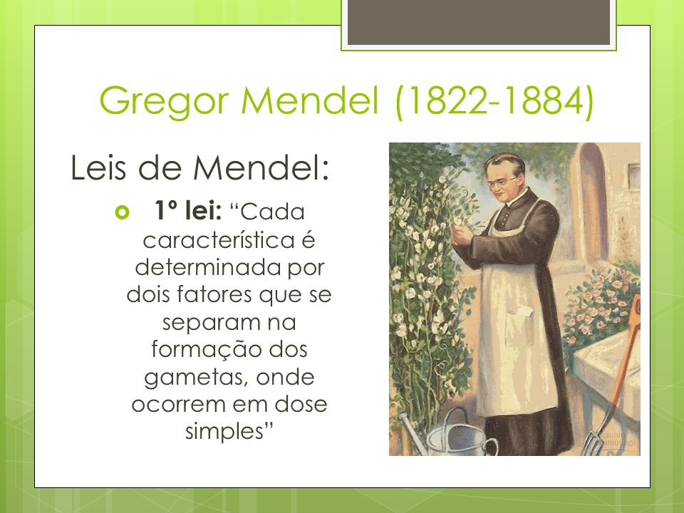 Gregor Mendel (1822-1884) Leis de Mendel: