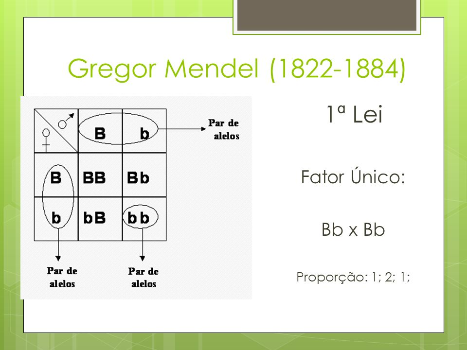 Gregor Mendel (1822-1884) 1ª Lei Fator Único: Bb x Bb