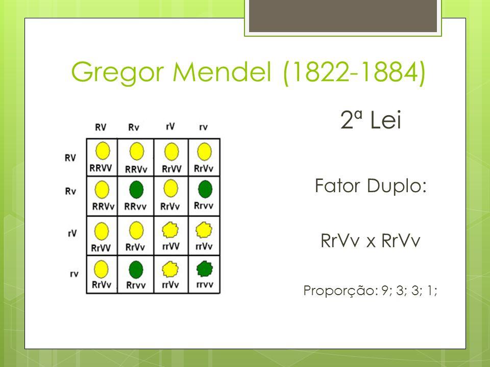 Gregor Mendel (1822-1884) 2ª Lei Fator Duplo: RrVv x RrVv