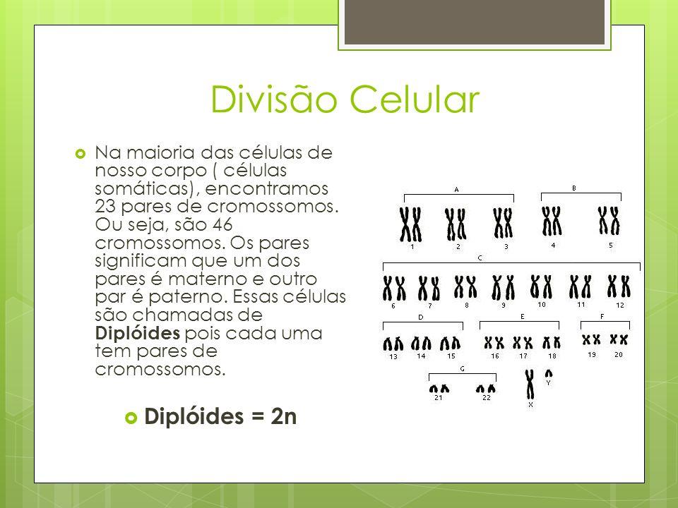 Divisão Celular Diplóides = 2n