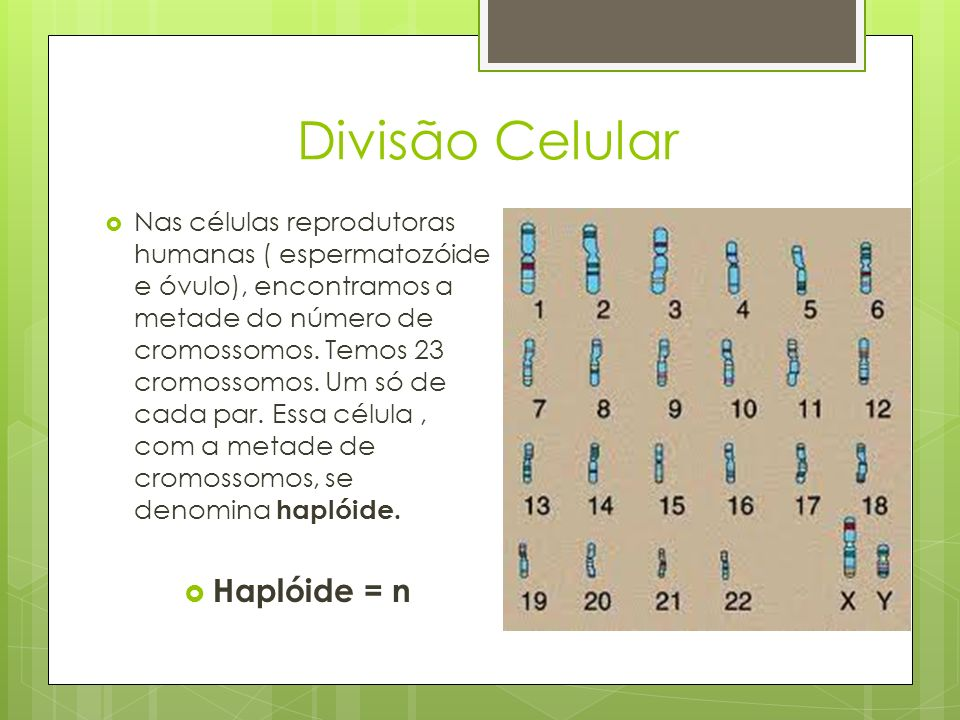 Divisão Celular Haplóide = n