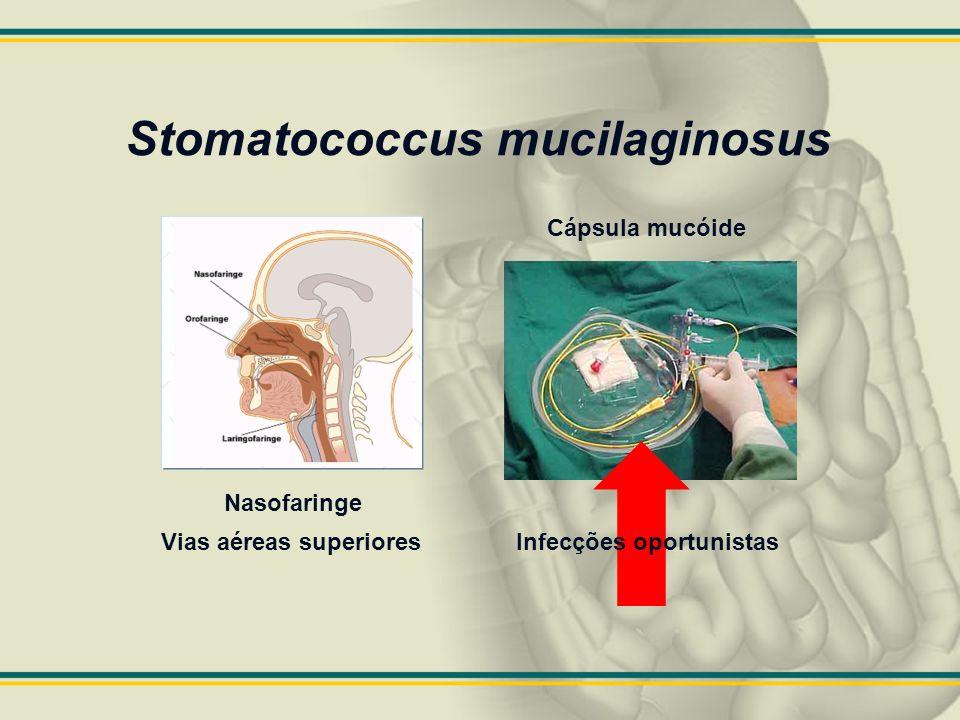 Stomatococcus mucilaginosus