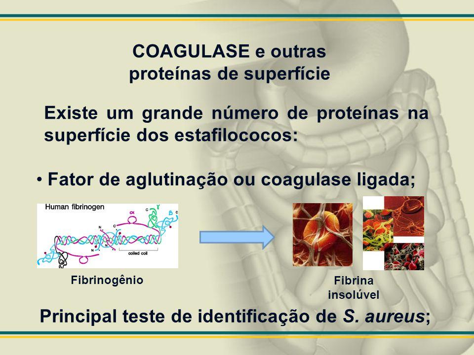 COAGULASE e outras proteínas de superfície