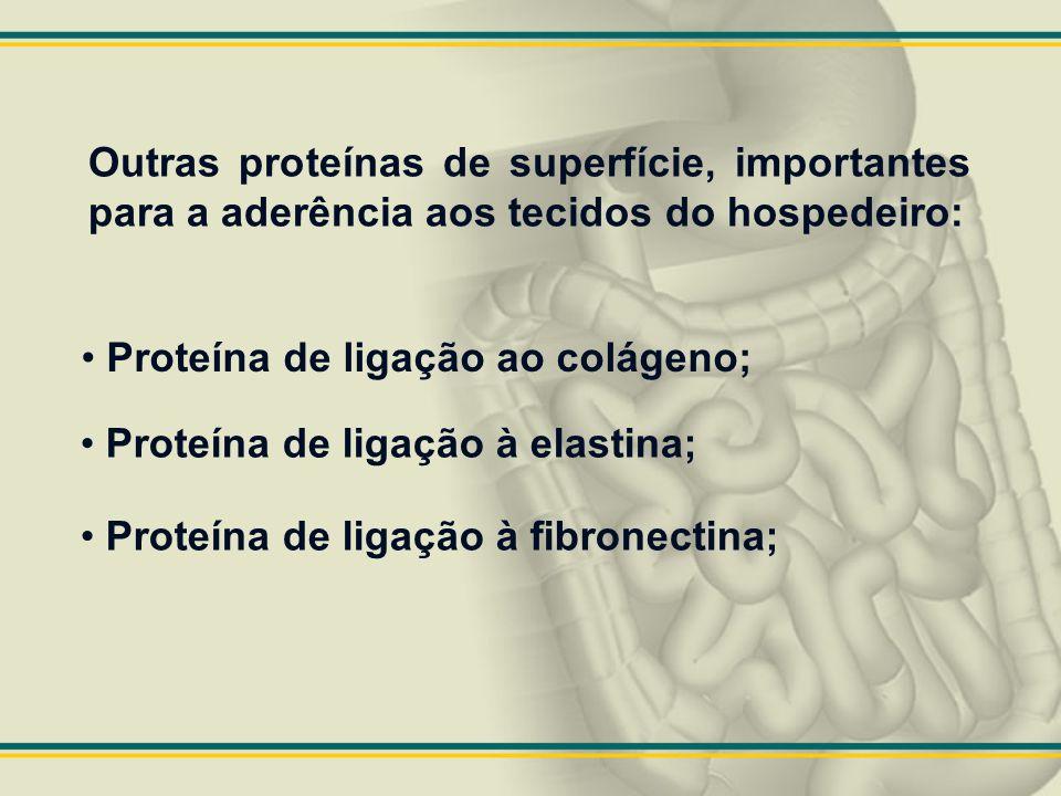 Outras proteínas de superfície, importantes para a aderência aos tecidos do hospedeiro: