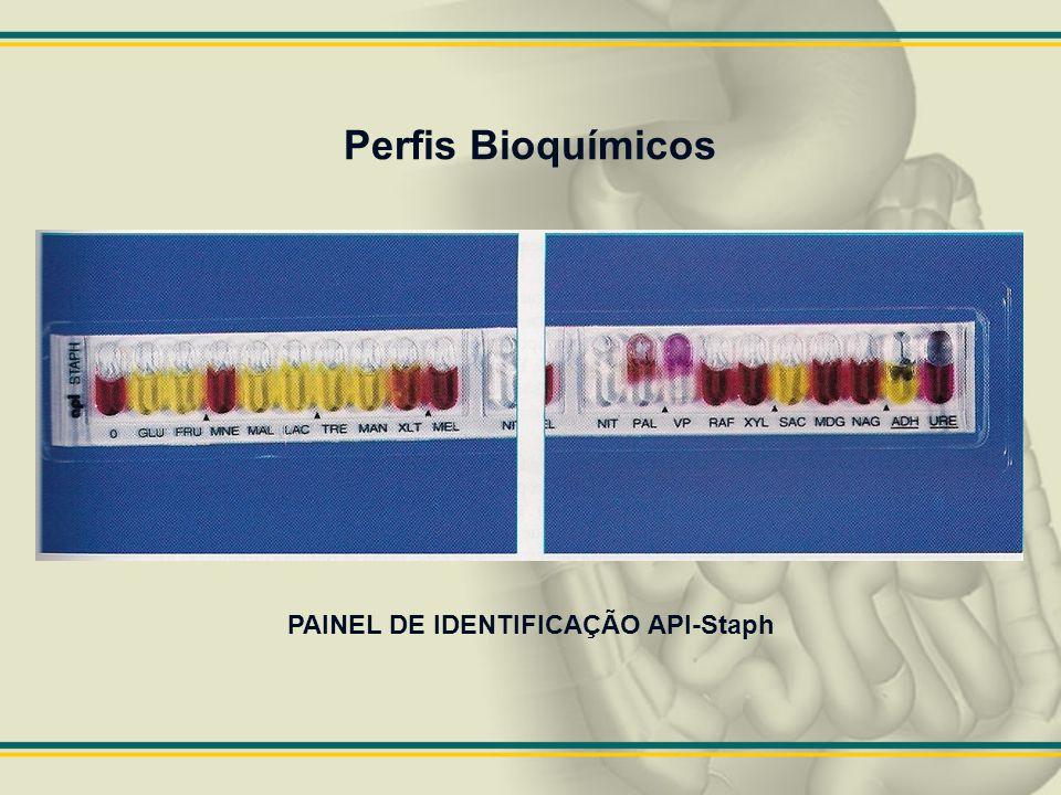 PAINEL DE IDENTIFICAÇÃO API-Staph