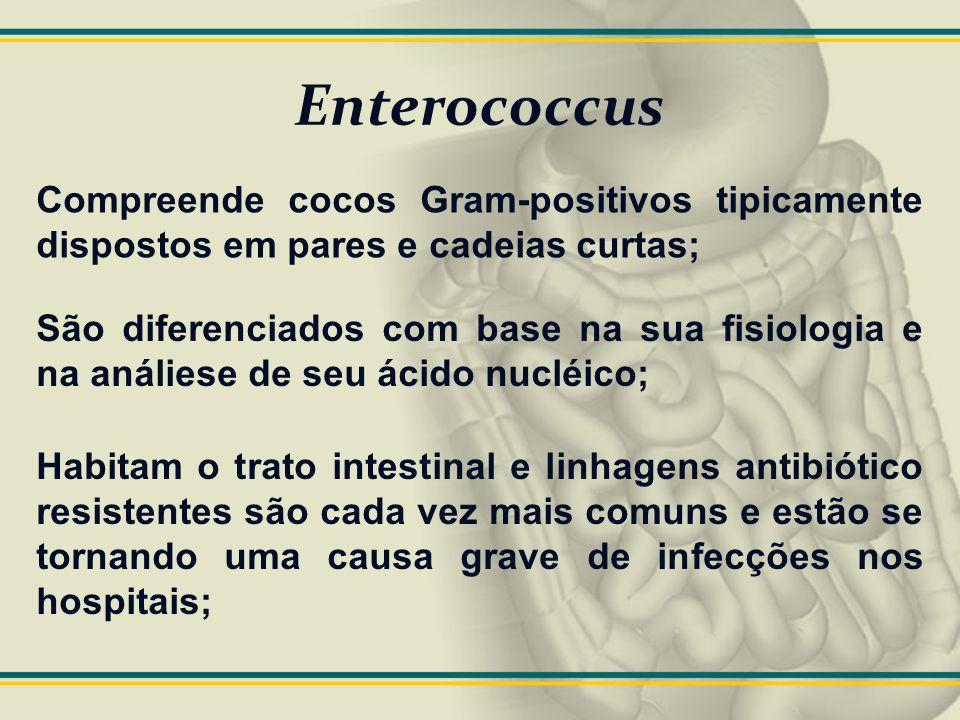 Enterococcus Compreende cocos Gram-positivos tipicamente dispostos em pares e cadeias curtas;