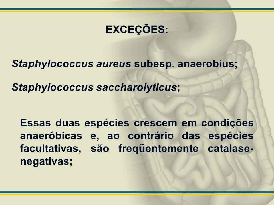 EXCEÇÕES: Staphylococcus aureus subesp. anaerobius; Staphylococcus saccharolyticus;