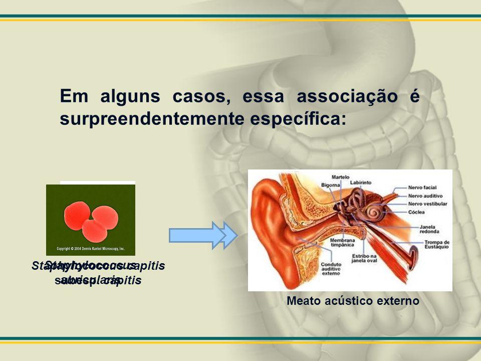 Staphylococcus auricularis Staphylococcus capitis subesp. capitis