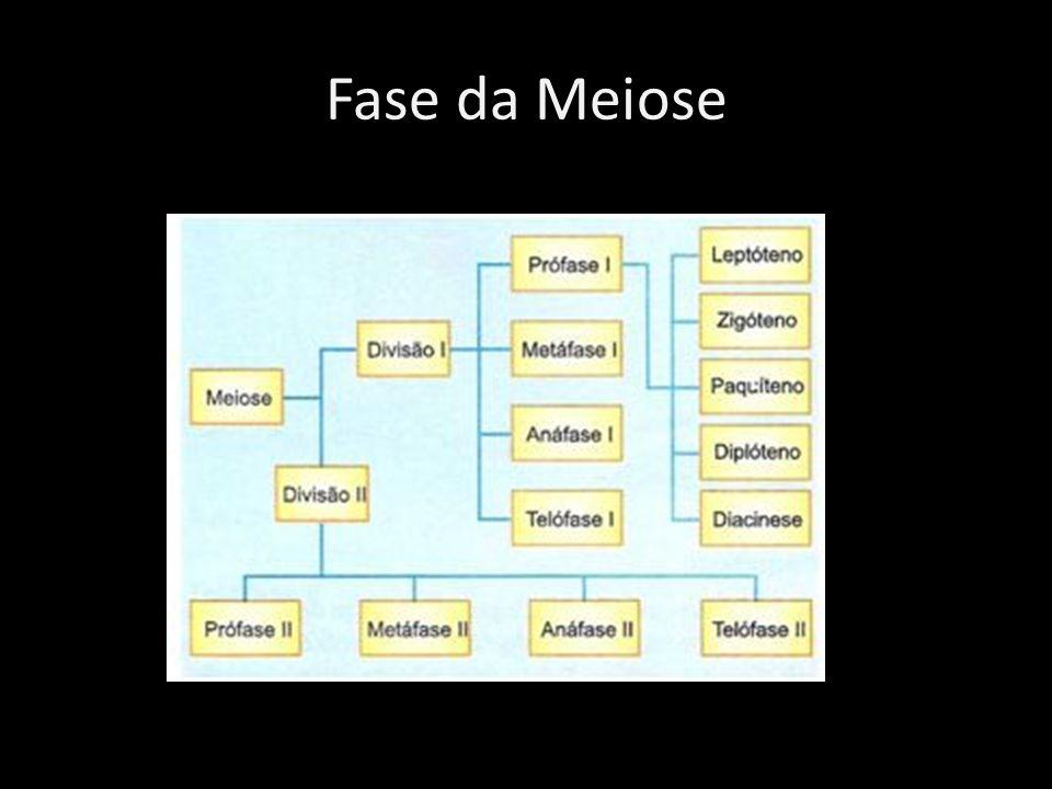 Fase da Meiose