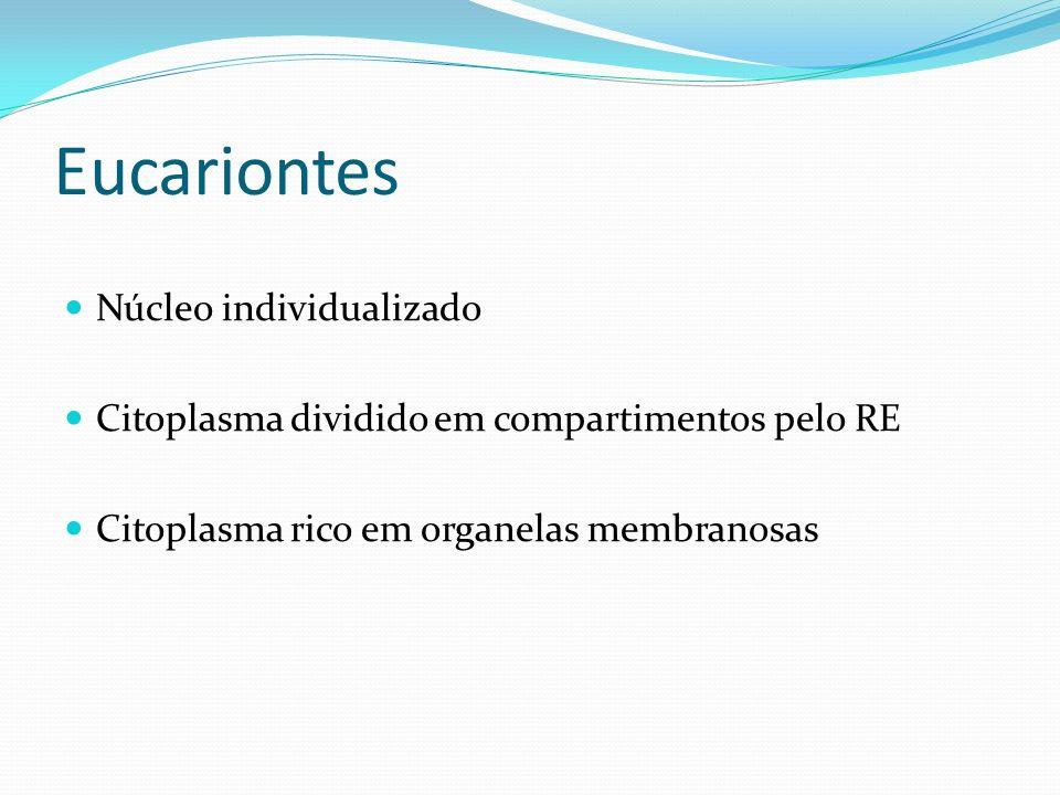 Eucariontes Núcleo individualizado