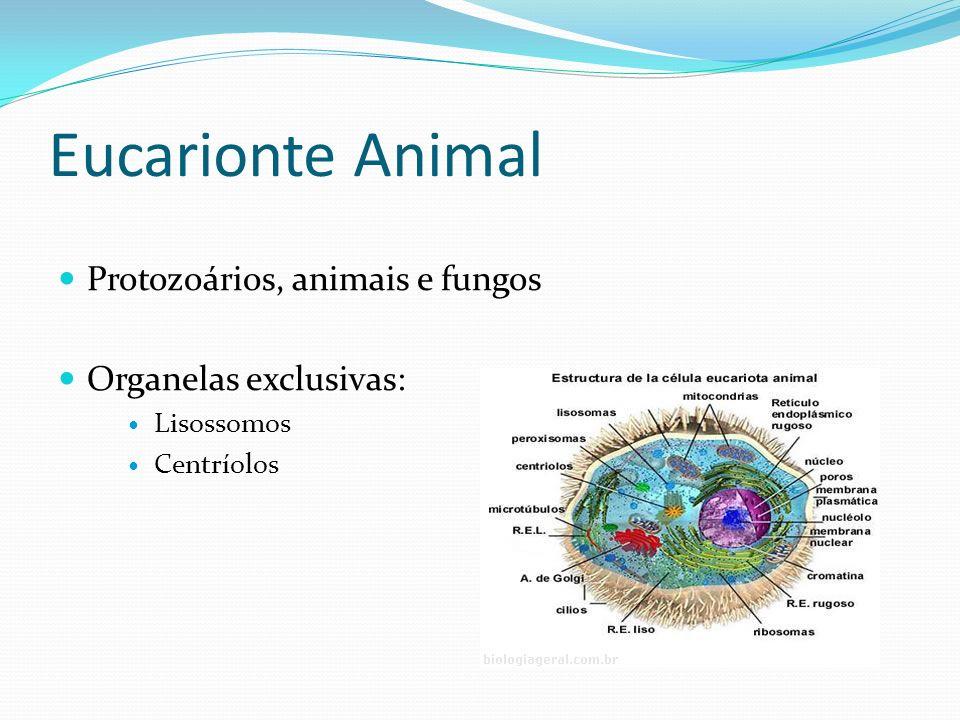 Eucarionte Animal Protozoários, animais e fungos Organelas exclusivas: