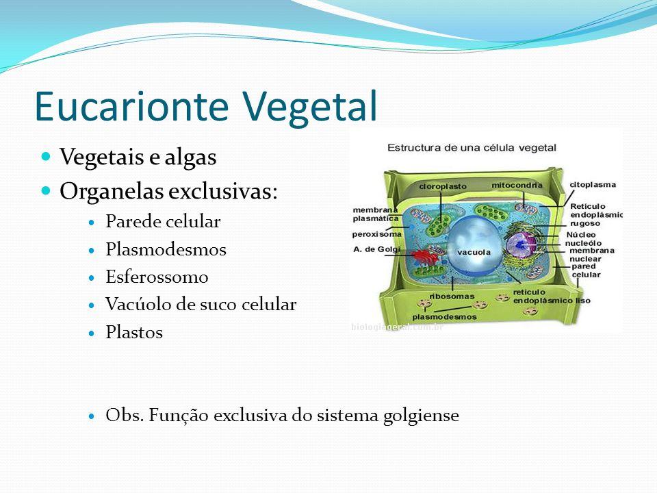 Eucarionte Vegetal Vegetais e algas Organelas exclusivas: