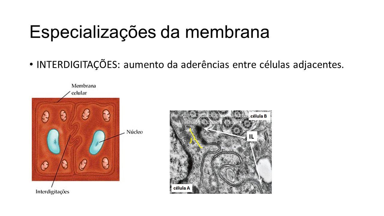 Especializações da membrana
