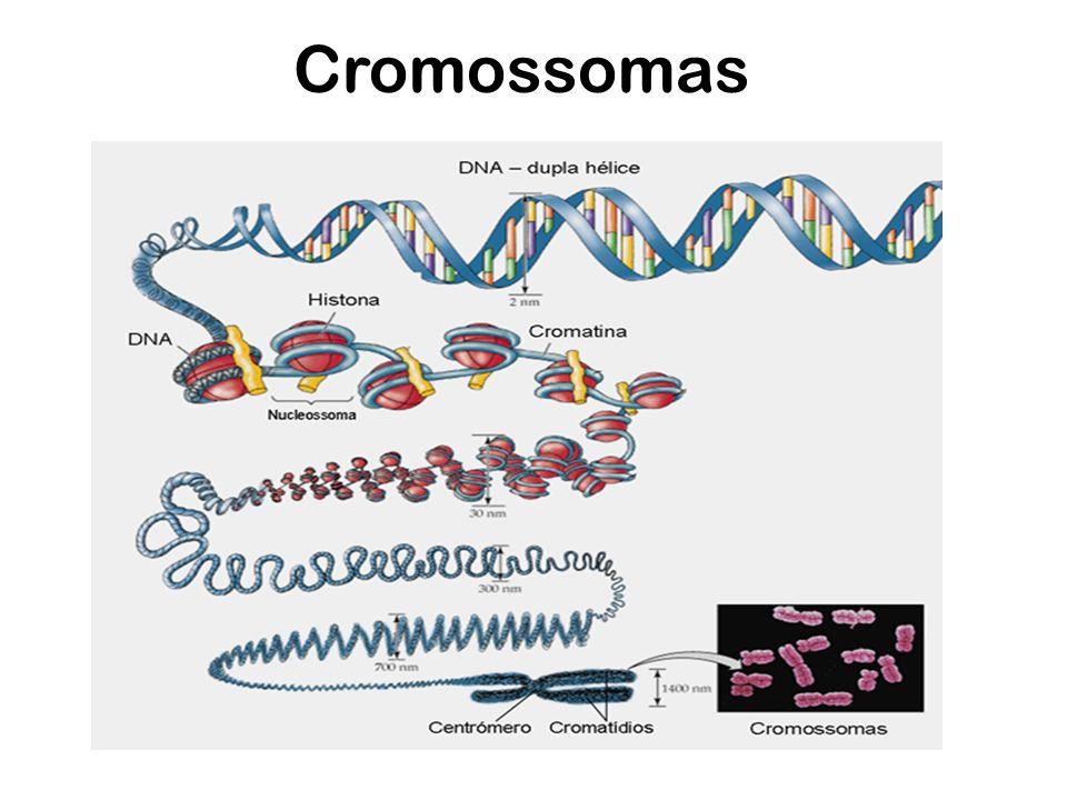 Cromossomas