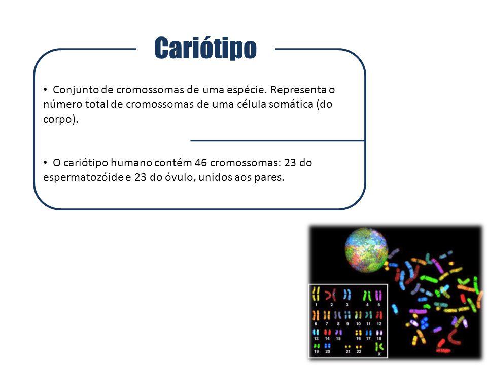 Cariótipo Conjunto de cromossomas de uma espécie. Representa o número total de cromossomas de uma célula somática (do corpo).