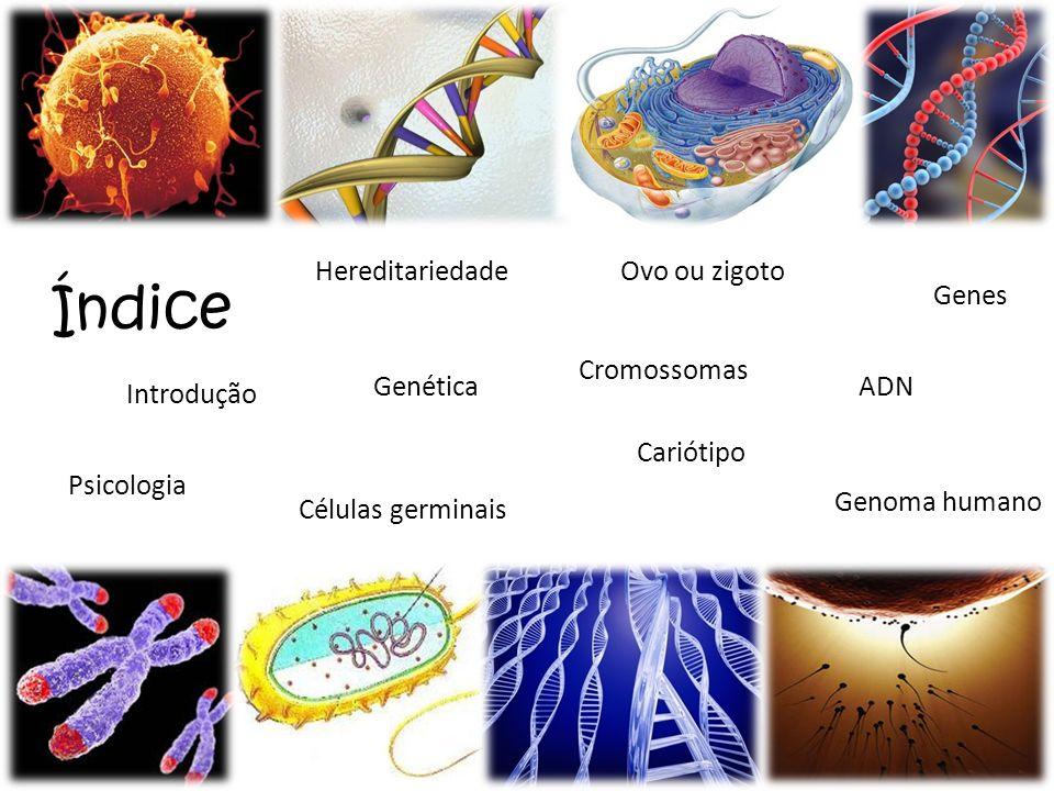 Índice Hereditariedade Ovo ou zigoto Genes Cromossomas Genética ADN