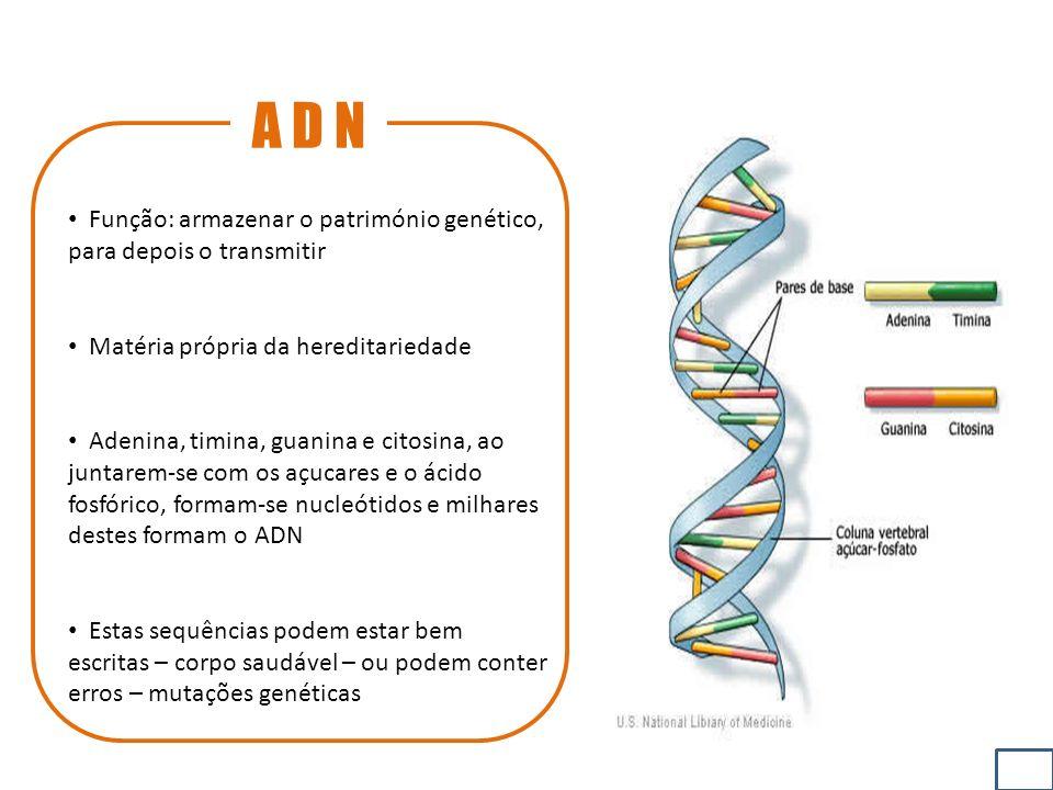 A D N Função: armazenar o património genético, para depois o transmitir. Matéria própria da hereditariedade.
