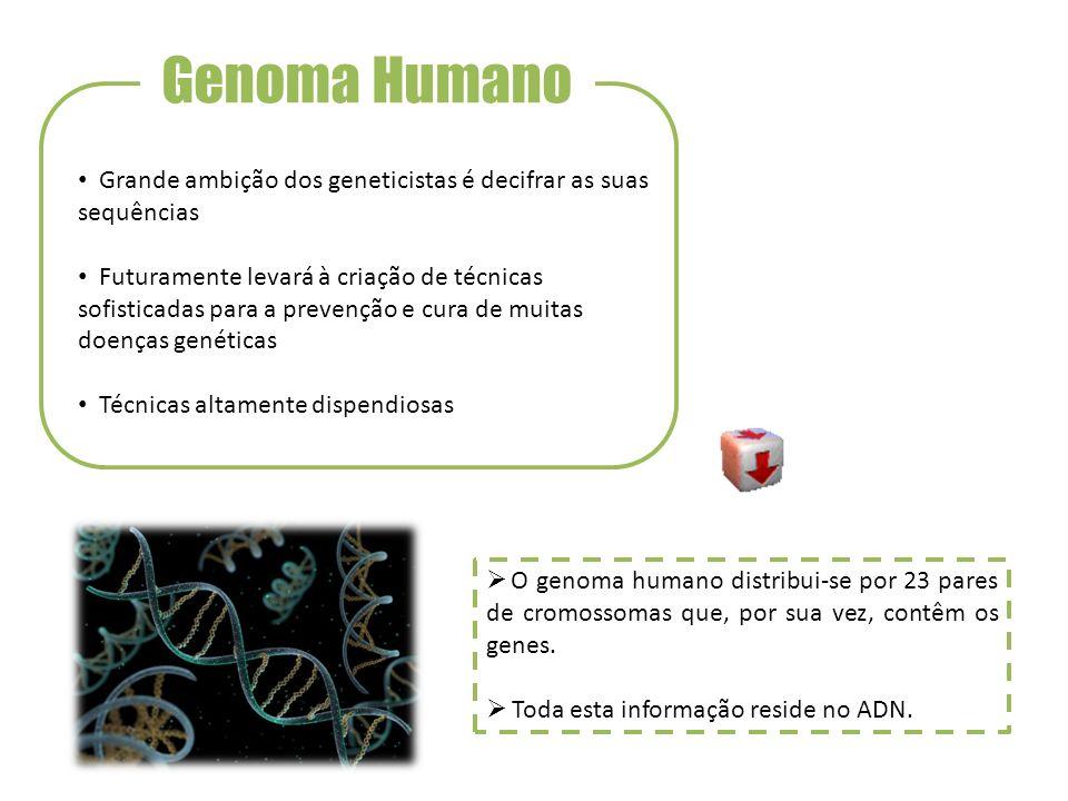 Genoma Humano Grande ambição dos geneticistas é decifrar as suas sequências.