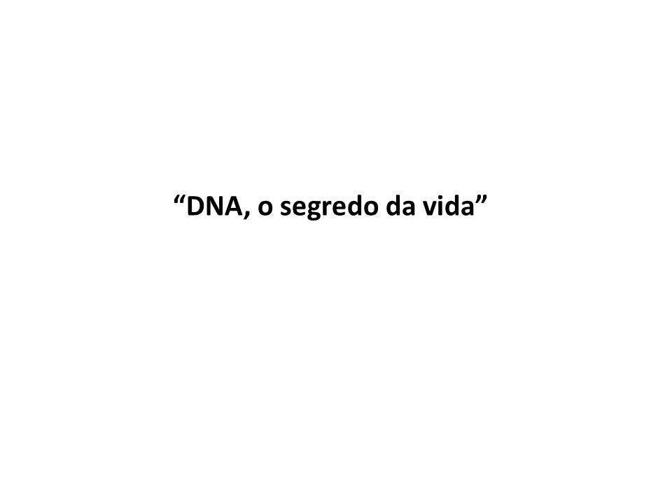 DNA, o segredo da vida