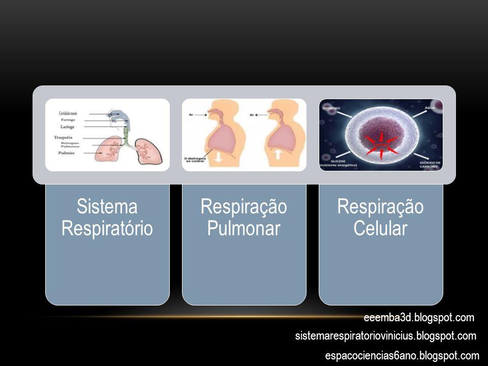 Sistema Respiratório Respiração Pulmonar Respiração Celular