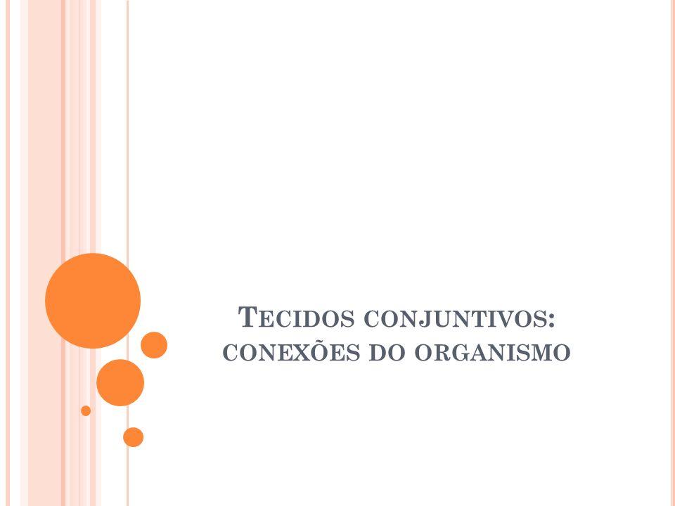 Tecidos conjuntivos: conexões do organismo