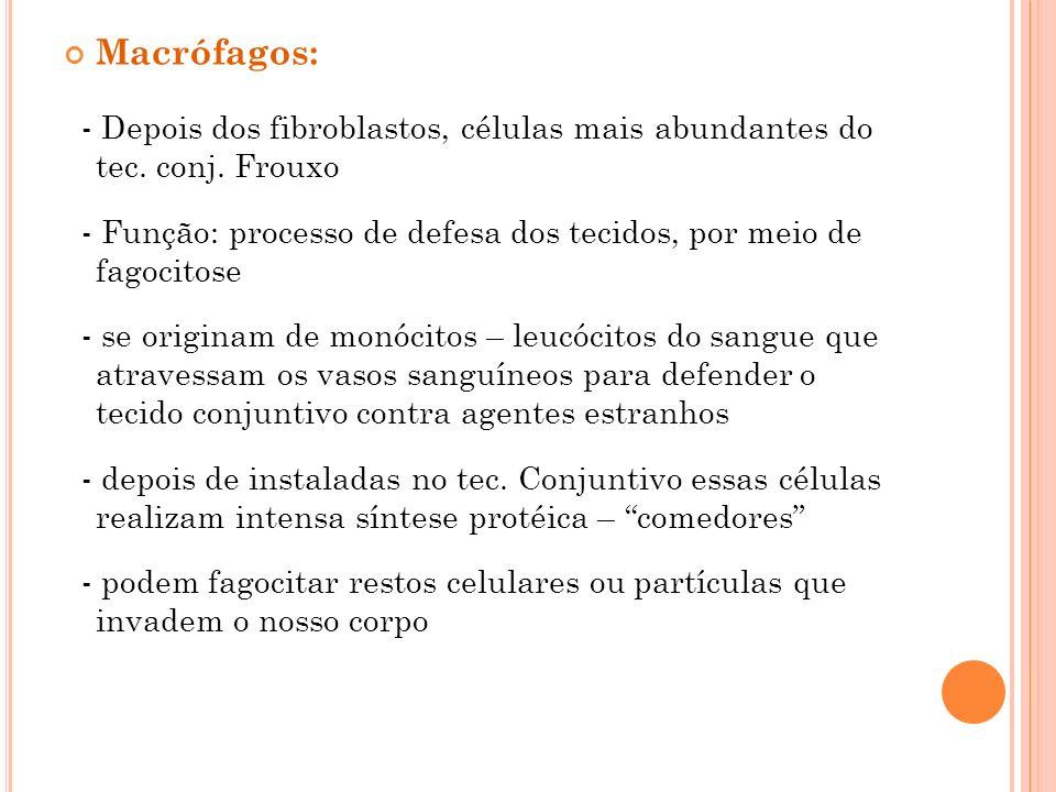 Macrófagos: - Depois dos fibroblastos, células mais abundantes do tec. conj. Frouxo.