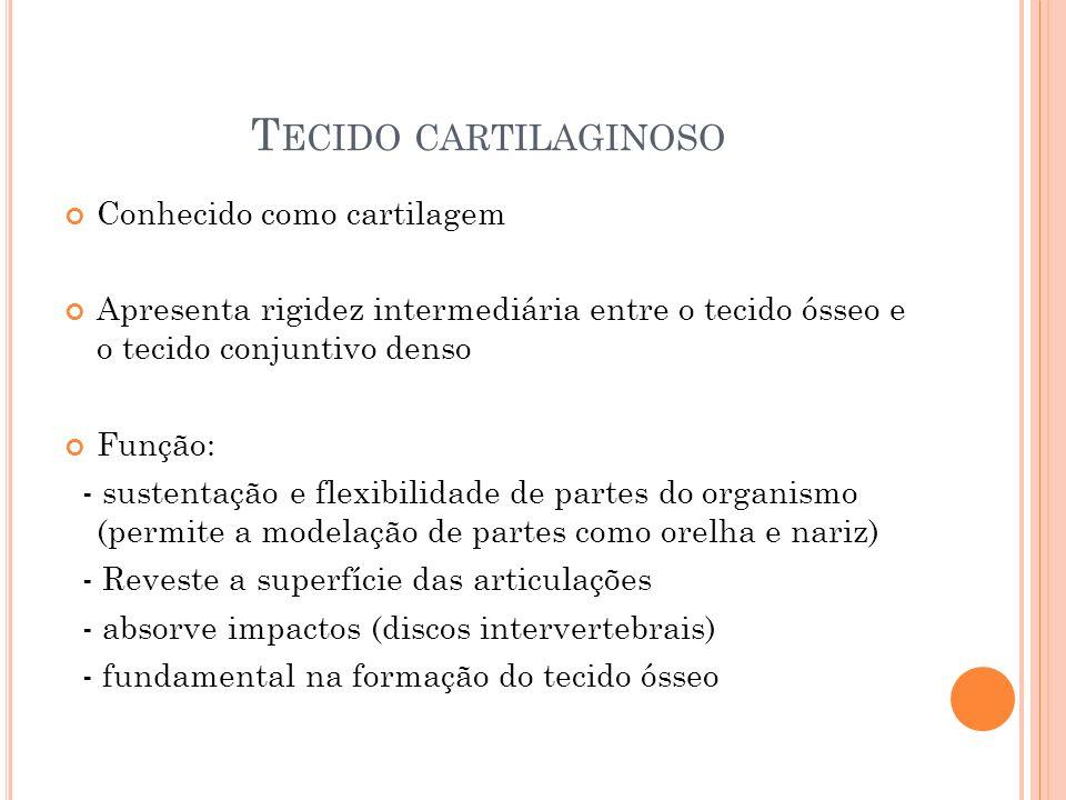 Tecido cartilaginoso Conhecido como cartilagem