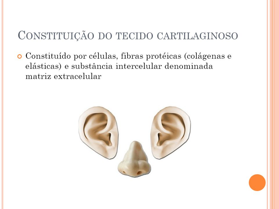 Constituição do tecido cartilaginoso