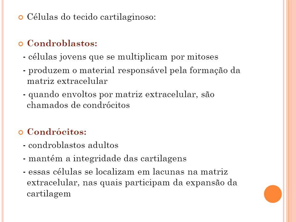 Células do tecido cartilaginoso: