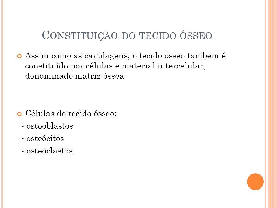 Constituição do tecido ósseo