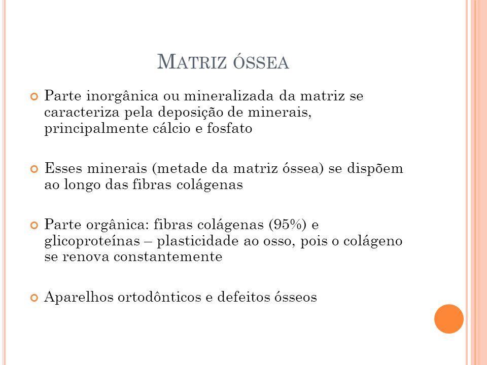 Matriz óssea Parte inorgânica ou mineralizada da matriz se caracteriza pela deposição de minerais, principalmente cálcio e fosfato.