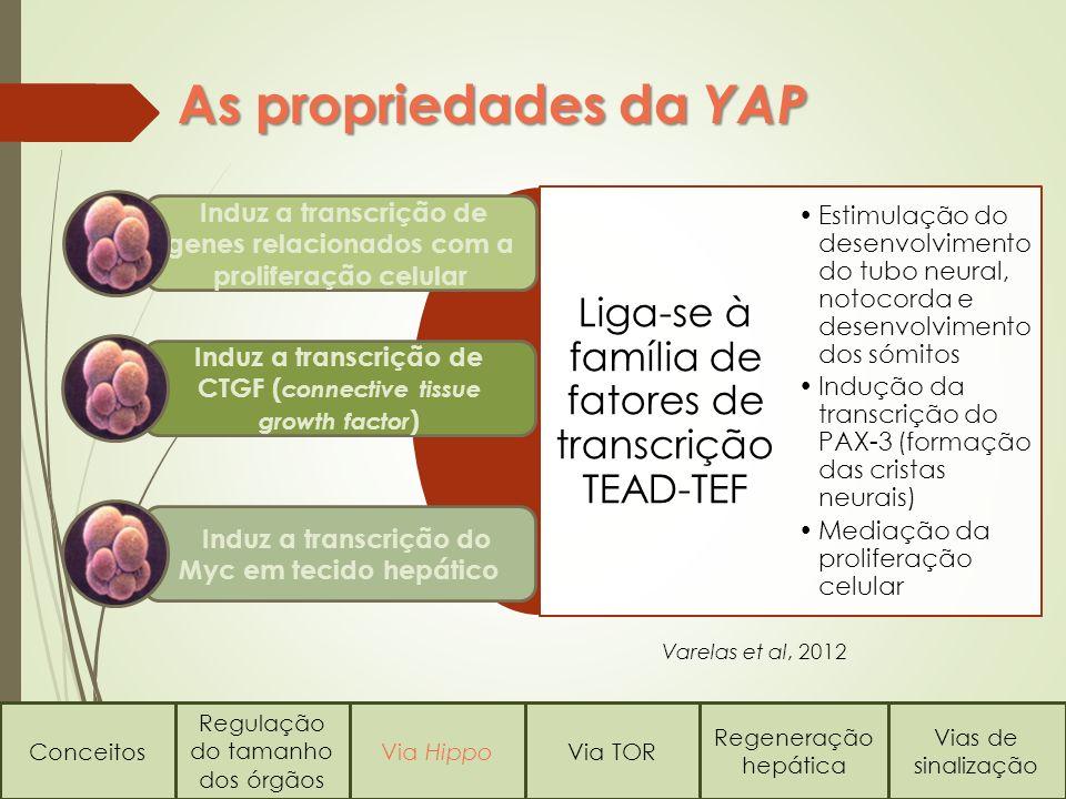 As propriedades da YAP Liga-se à família de fatores de transcrição TEAD-TEF.