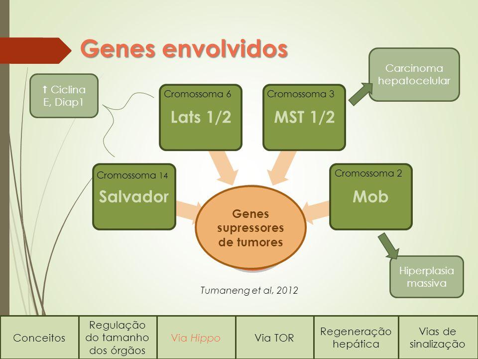 Genes supressores de tumores