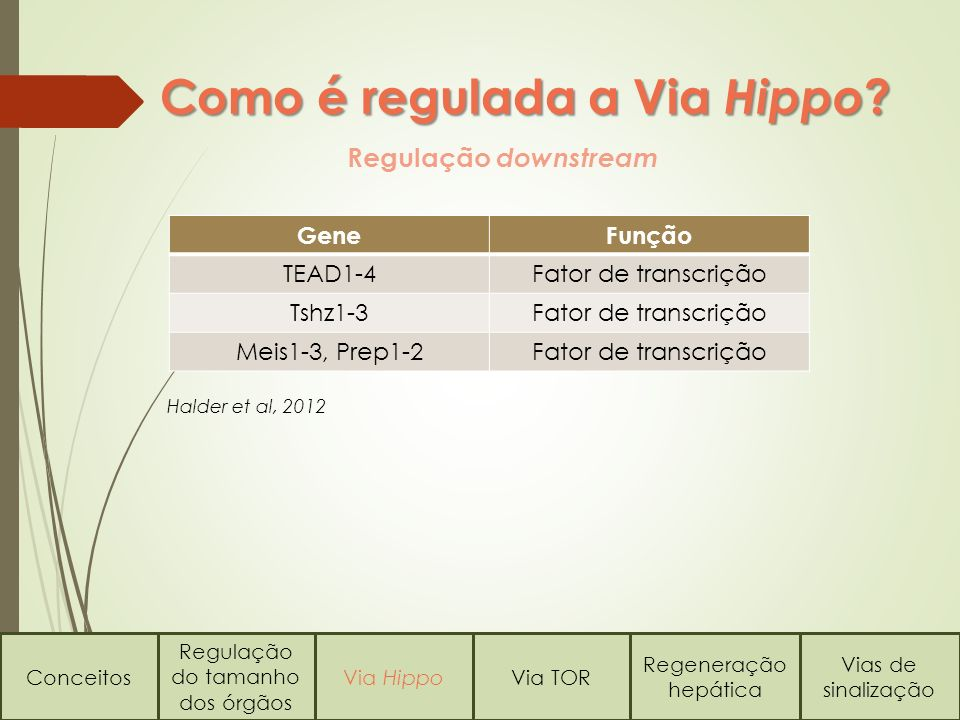 Como é regulada a Via Hippo