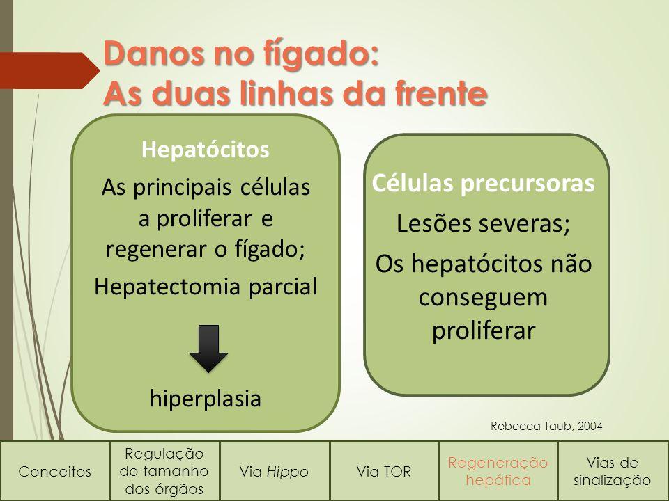 Danos no fígado: As duas linhas da frente