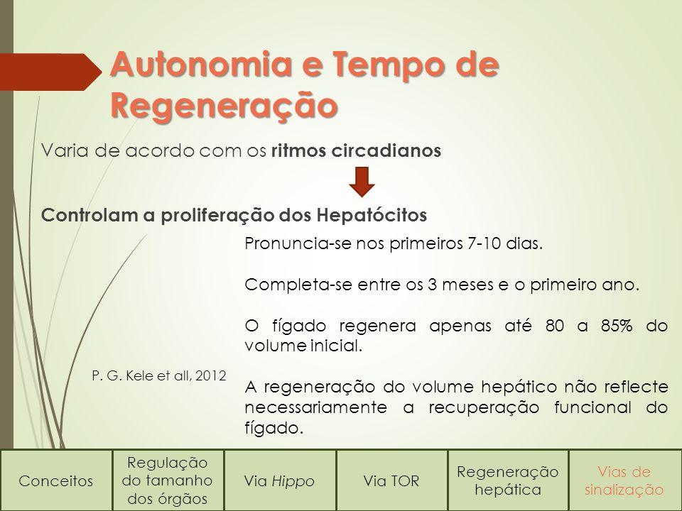 Regulação do tamanho dos órgãos