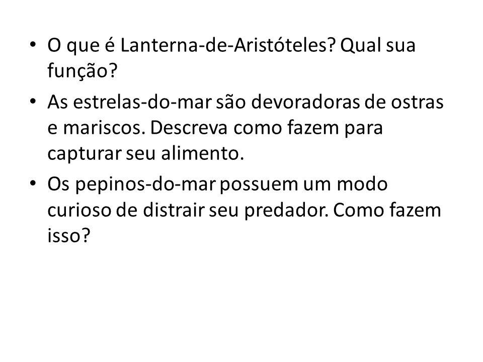 O que é Lanterna-de-Aristóteles Qual sua função