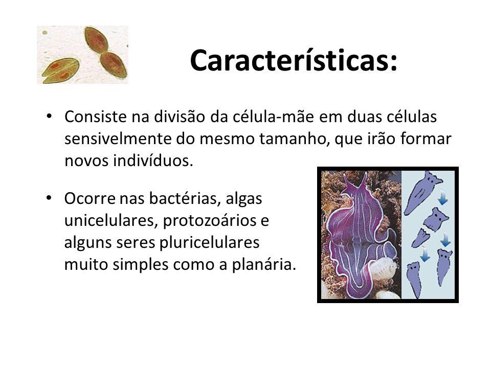 Características: Consiste na divisão da célula-mãe em duas células sensivelmente do mesmo tamanho, que irão formar novos indivíduos.