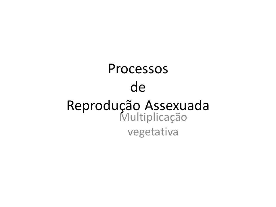 Processos de Reprodução Assexuada