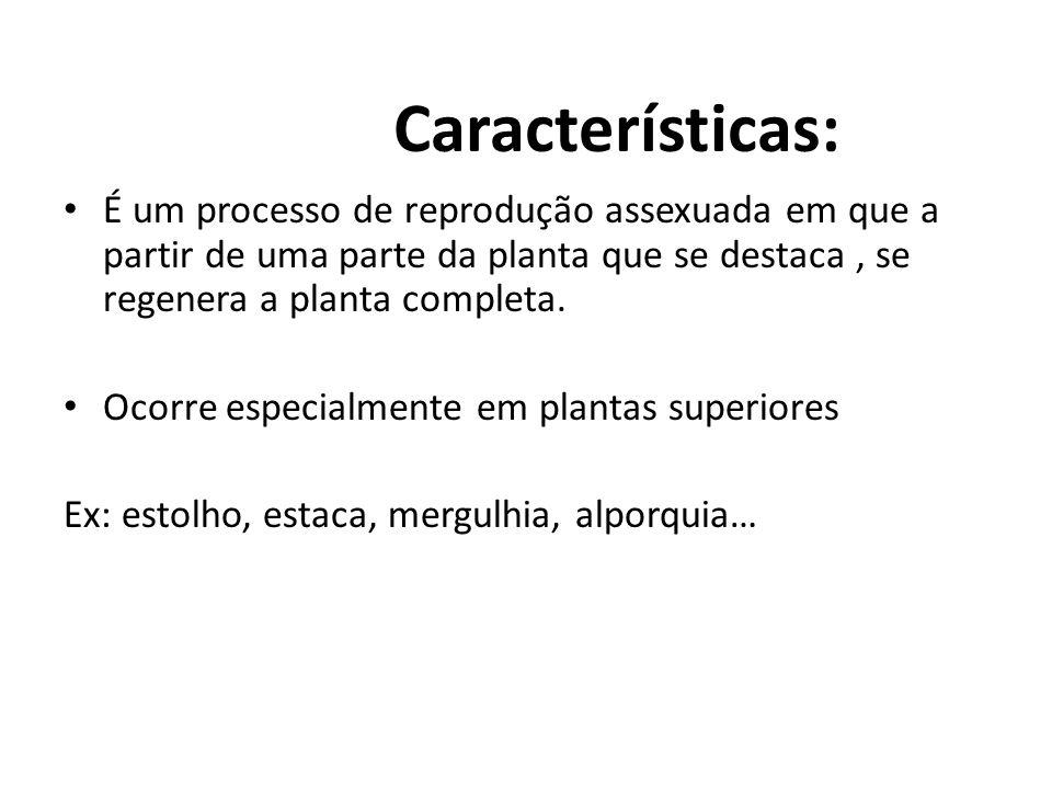 Características: É um processo de reprodução assexuada em que a partir de uma parte da planta que se destaca , se regenera a planta completa.