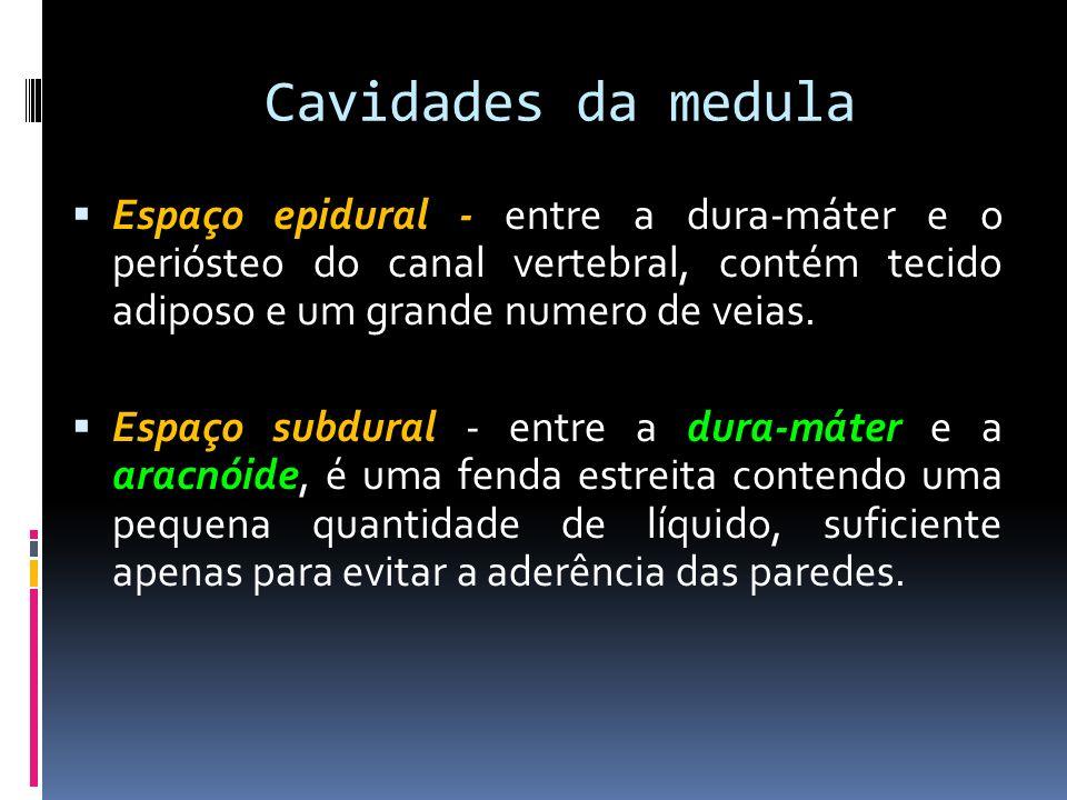 Cavidades da medula Espaço epidural - entre a dura-máter e o periósteo do canal vertebral, contém tecido adiposo e um grande numero de veias.