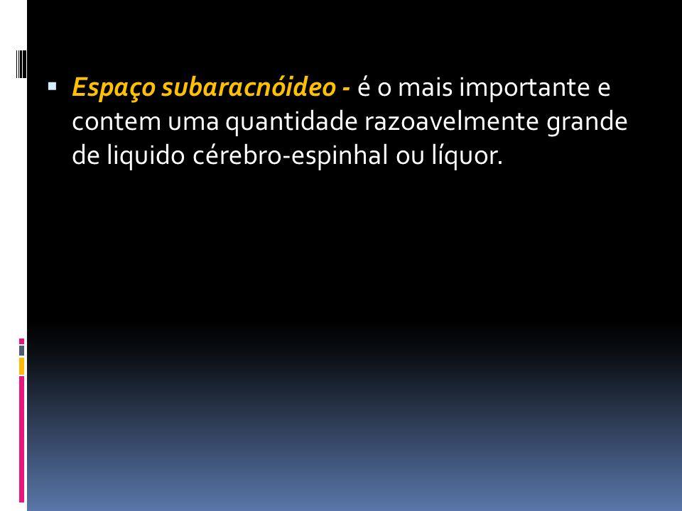 Espaço subaracnóideo - é o mais importante e contem uma quantidade razoavelmente grande de liquido cérebro-espinhal ou líquor.